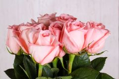 Pink roses bouquet. Isolated on white background Stock Image