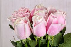 Pink roses bouquet. Isolated on white background Royalty Free Stock Photos