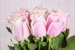 Pink roses bouquet. Isolated on white background Royalty Free Stock Image