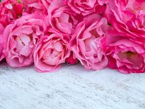 Pink roses bouquet on the rustic white painted background. Pink curly roses bouquet on the rustic white painted background Stock Photography