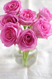 Pink roses. Stock Images