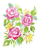 Pink roses. Bouquet of roses, watercolor, can be used as greeting card, invitation card for wedding, birthday and other holiday and summer background Vector Illustration