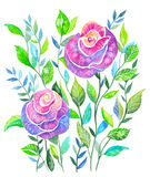 Pink roses. Bouquet of roses, watercolor, can be used as greeting card, invitation card for wedding, birthday and other holiday and summer background Stock Illustration