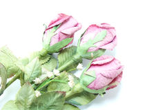 Pink roses bouquet Royalty Free Stock Photos