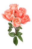 Pink roses bouquet Royalty Free Stock Images