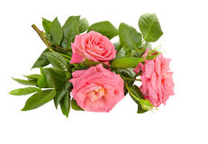 Pink roses bouquet on a white background Stock Photography