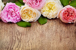 Pink roses bouquet on a white background Royalty Free Stock Photos
