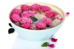 Pink roses in bowl Royalty Free Stock Photos