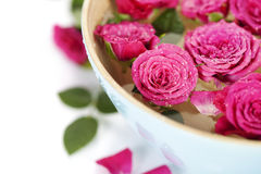 Pink roses in bowl Royalty Free Stock Photography