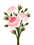 Pink roses branch. Royalty Free Stock Photos