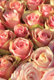 Pink roses in a bridal arrangement Stock Photo