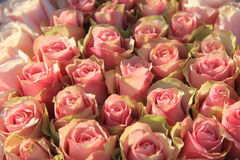 Pink roses in a bridal arrangement Stock Image