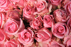 Pink roses in bridal bouquet Royalty Free Stock Images