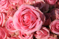 Pink roses in bridal bouquet Stock Image