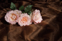 Pink Roses on Brown Throw stock image