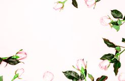 Pink roses buds on white background. Flat lay, top view. Valentine`s background. Pink roses buds on white background. Flat lay, top view Stock Images