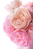 Pink roses bunch Royalty Free Stock Photography