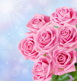Pink roses bunch Stock Photos