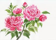 Pink roses bush. Pink rose bush original watercolor painting on white background royalty free illustration