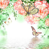 pink roses and butterfly Royalty Free Stock Photo
