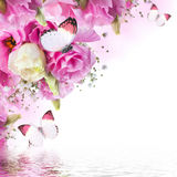 Pink roses and butterfly Royalty Free Stock Images
