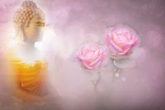 Pink roses color soft style for sweet bokeh background with copy royalty free stock photography