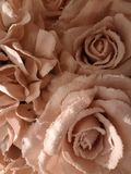 Pink roses covered with white frost stock photo