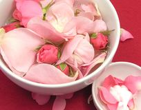 Pink roses and cream Royalty Free Stock Photo