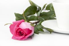 pink roses in a cup Stock Photos