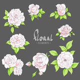 Pink roses on a dark background Royalty Free Stock Image