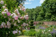 Pink roses at Eastcote House Gardens, historic walled garden in Eastcote, Pinner, UKgdon, UK