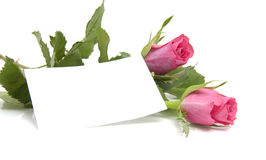 Pink roses and empty card Royalty Free Stock Images