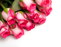 Pink roses and empty space Stock Photo