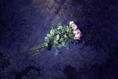 Pink roses floating in forest puddle Stock Photography