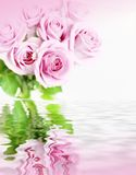 Pink roses in flood. Pink roses in close up in reflection Royalty Free Stock Images