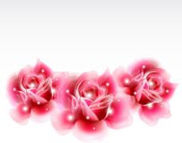 Pink roses Floral Design Elements. Vector Stock Images