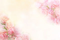 Pink roses flower border soft background for valentine Stock Photos