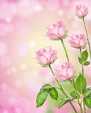 Pink roses flowers background with bokeh, corner frame Stock Photography