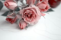 Pink roses. Flowers. Use printed materials, signs, items, websites, maps, posters, postcards, packaging. Postcard with the word -. Pink roses. Flowers. Use royalty free stock photography