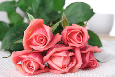 Pink Roses, Flowers on White Background, card for Valentines day, copy space Stock Images