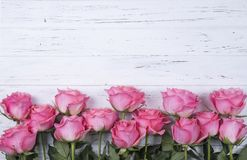 Pink roses flowers on white wooden background with copy space. T. Pink roses flowers on white wooden background. Top view Royalty Free Stock Photo