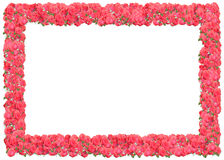 Pink Roses frame Royalty Free Stock Images