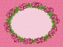 Pink roses. Frame of burgundy roses with green foliage on a pink background Stock Images