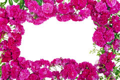 Pink roses frame isolated Stock Photo