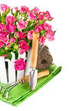 Pink roses with garden tools Stock Photo