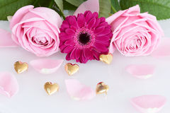 Pink roses and gerbera with leaves and golden hearts Stock Photos