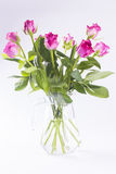 Pink roses in glass jug on white background Royalty Free Stock Photography