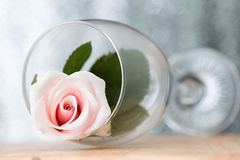 Pink roses in a glass Stock Images