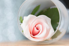 Pink roses in a glass Royalty Free Stock Photography