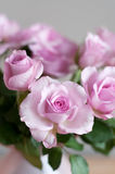 Pink roses on gray wall Stock Image